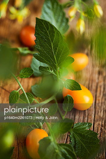 Fresh tomatoes - p1640m2261073 by Holly & John