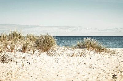 Strand mit Dünengras auf Sylt - p1198m1002977 von Guenther Schwering