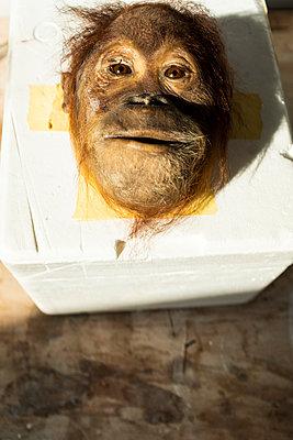 Head of a stuffed monkey - p795m2228815 by JanJasperKlein