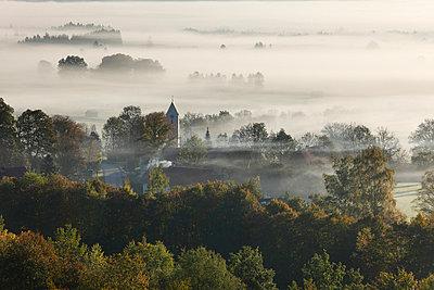 View of tree in fog - p300m660107f by Martin Siepmann