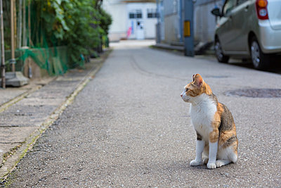 Stray Cat - p307m1012073f by AFLO
