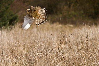 Bird of prey - p4170139 by Pat Meise