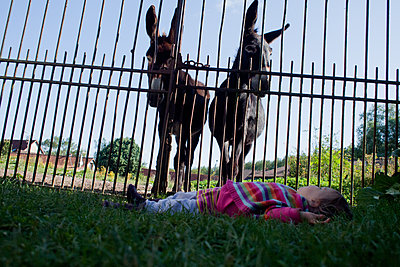 Two donkeys behind a fence - p927m1496372 by Florence Delahaye