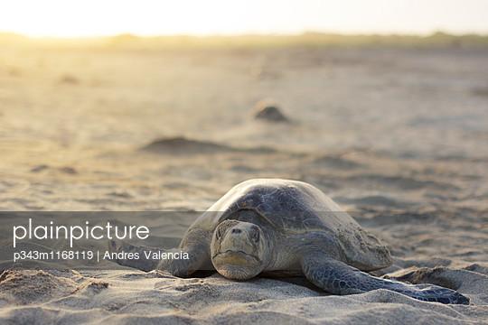 p343m1168119 von Andres Valencia