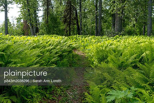 p343m2038296 von Sarah Ann Loreth