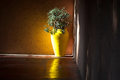 Yellow vase - p4450942 by Marie Docher