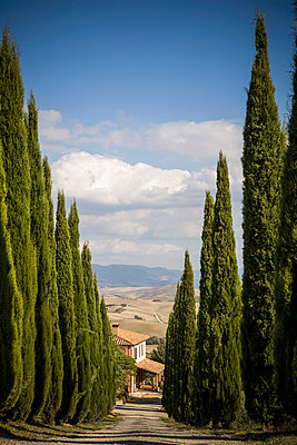 Cypress trees growing along rural road - p555m1419043 by Walter Zerla