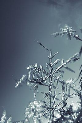 Zarte Schneeflocken im Gegenlicht - p235m2044210 von KuS