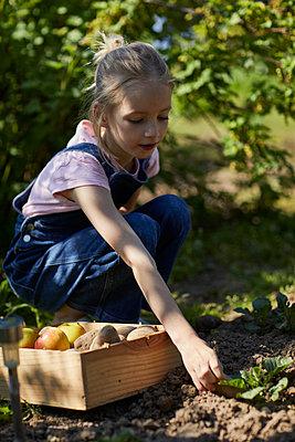 Girl harvesting in allotment garden - p300m2198597 by Maya Claussen