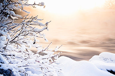 Snow piled on tree branches - p429m664794 by Hugh Whitaker