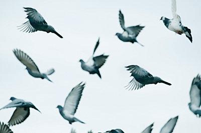 birds in flight in the sky - p44213045f by Ben Welsh