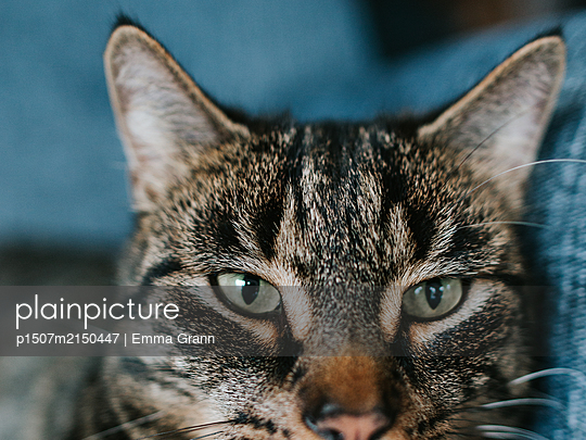 Close-up of cat - p1507m2150447 by Emma Grann