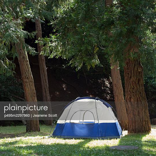 Tent next to Redwood trees - p495m2297860 by Jeanene Scott