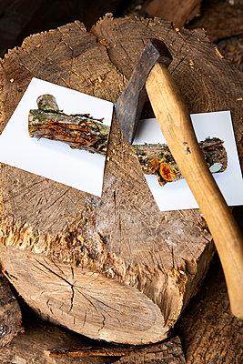 Chopping wood - p1017m2203656 by Roberto Manzotti