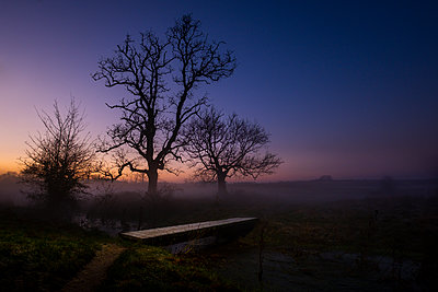 Large old leafless trees at dusk - p1057m2142803 by Stephen Shepherd