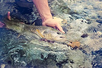 Slovenia, man fly fishing in Soca river catching a fish - p300m1499524 by Matthias Buchholz