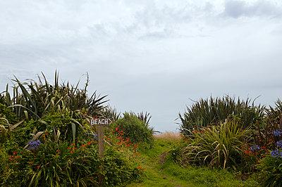 Weg zum Strand von Hokitika - p470m1573204 von Ingrid Michel