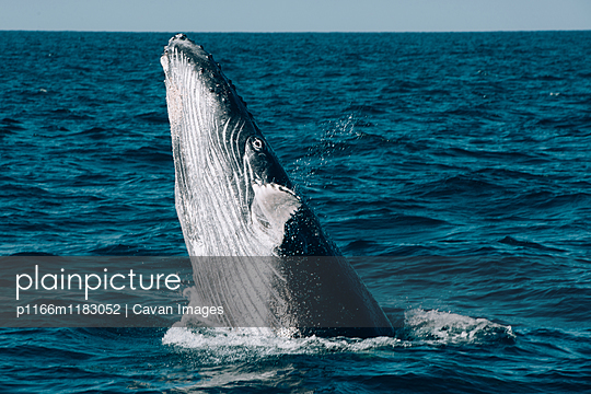 p1166m1183052 von Cavan Images