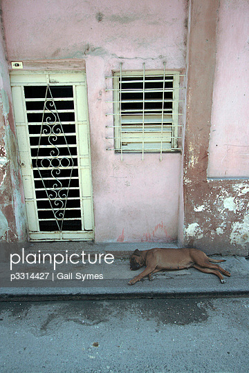 Sleeping dog in street - p3314427 by Gail Symes