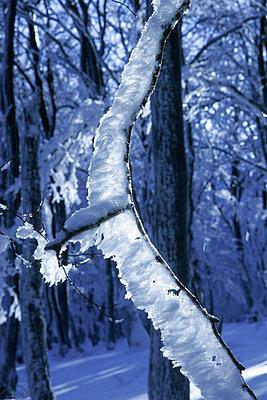 Verschneiter ruhiger Wald - p4170030 von Pat Meise