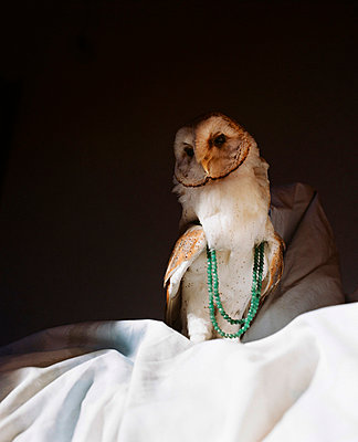 Owl with necklace - p4530058 by Mylène Blanc