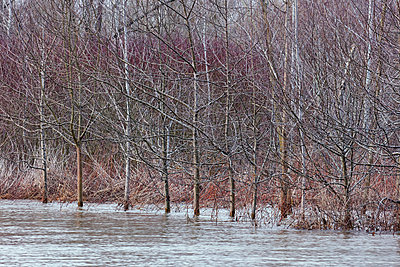 Hochwasser am Rhein - p719m1539556 von Rudi Sebastian