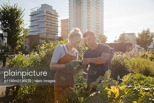 Young couple harvesting fresh vegetables in sunny, urban community garden - p1192m2130272 by Hero Images