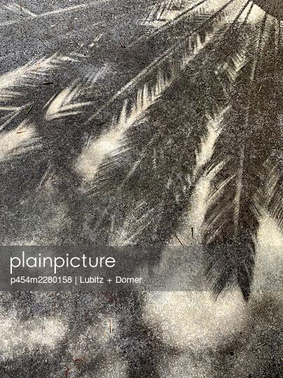 Grey palm leaves - p454m2280158 by Lubitz + Dorner
