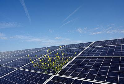 Solar panels at solar farm, Geldermalsen, Gelderland, Netherlands - p429m2127795 by Mischa Keijser