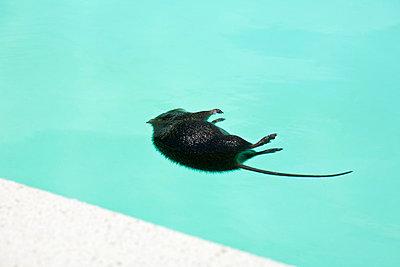 Rat - p5010054 by Elke Esser