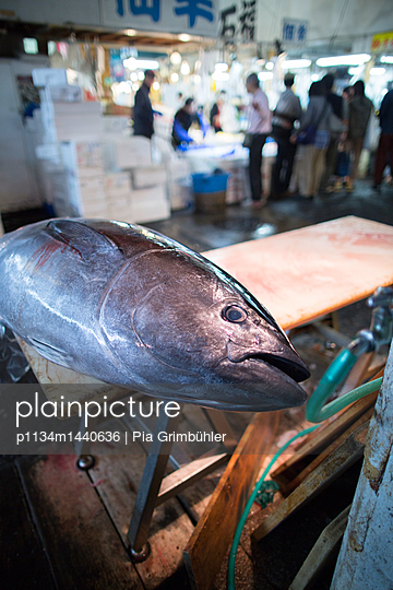 Tuna on sale at Tsukiji fish market - p1134m1440636 by Pia Grimbühler