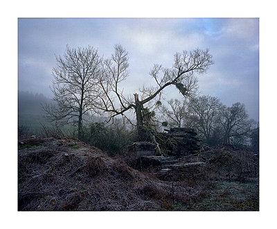 Broken tree - p1118m1553114 by Tarik Yaici