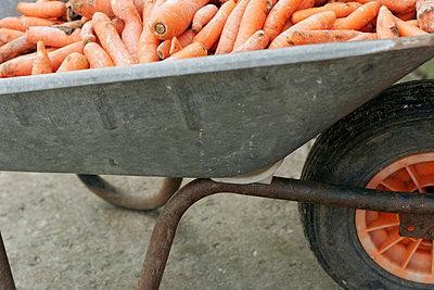 Karre voll Karotten - p1650379 von Andrea Schoenrock