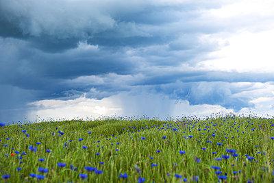 Gewitter im Juni - p533m1182304 von Böhm Monika