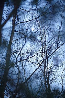 Bäume im Mondlicht - p1115m890251 von Nikolai Buroh