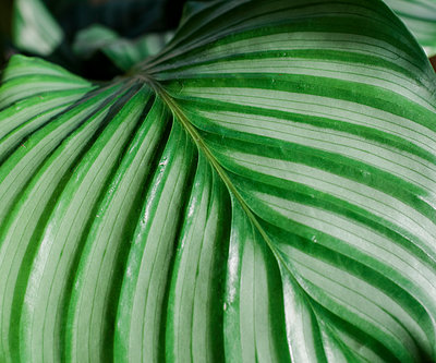 close up of a green plant leaf - p1166m2113223 by Cavan Images