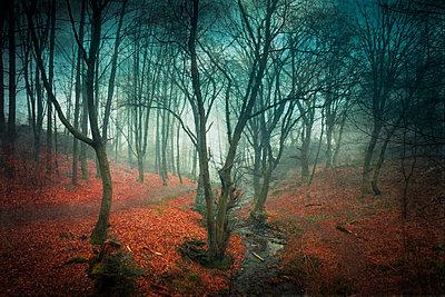 Germany, Wuppertal, Forest at end of winter - p300m1175978 by Dirk Wüstenhagen