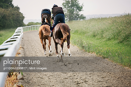 Two horses and riders on a gallops path, racing against each other in a training exercise. Racehorse training.