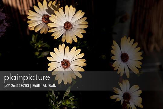 Schattenspiel - p212m889763 von Edith M. Balk
