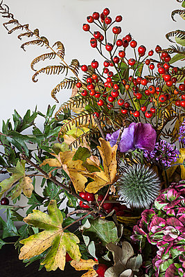 Autumn bunch - p1470m1539167 by julie davenport