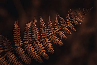 Fern leaf - p1585m2283820 by Jan Erik Waider