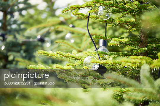 Electric lamps hanging in fir tree - p300m2012231 von gpointstudio