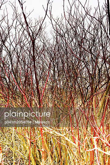 Shrubbery - p341m2054094 by Mikesch