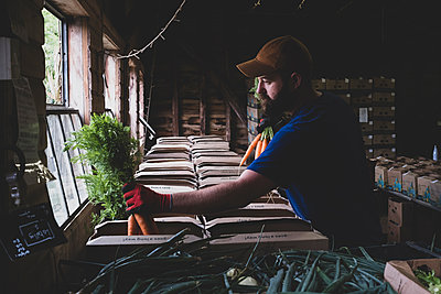 Farmer standing in a farm shop, packing fruit and vegetable boxes. - p1100m2271468 by Mint Images