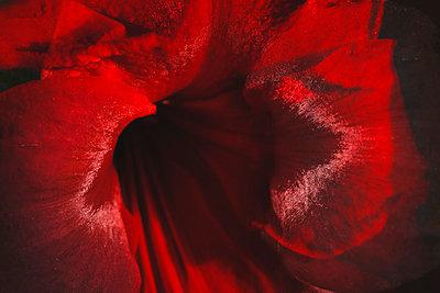 Amarillia - p1145m938916 by Kerstin Lakeberg