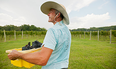 Caucasian farmer with crate of grapes in vineyard - p555m1454124 by Mark Edward Atkinson/Tracey Lee