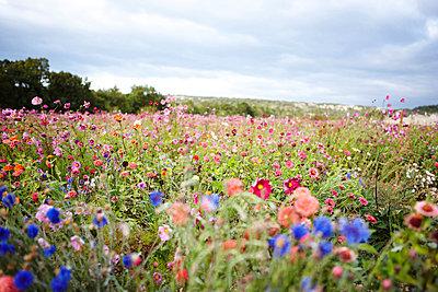 Blumenwiese Provence - p8870005 von Christian Kuhn