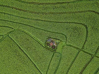 A farm in a field, aerial view - p1108m2141974 by trubavin