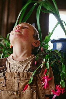 Junge unter Weihnachtskaktus - p1169m1032776 von Tytia Habing