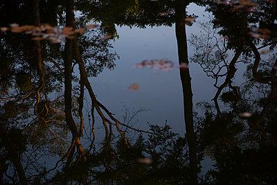 Kiefern spiegeln sich im Wasser - p1650m2231837 von Hanna Sachau